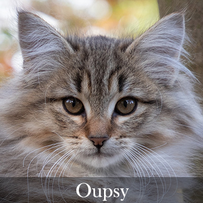 Oupsy