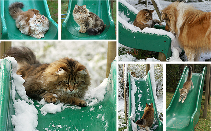 Cats on the Toboggan